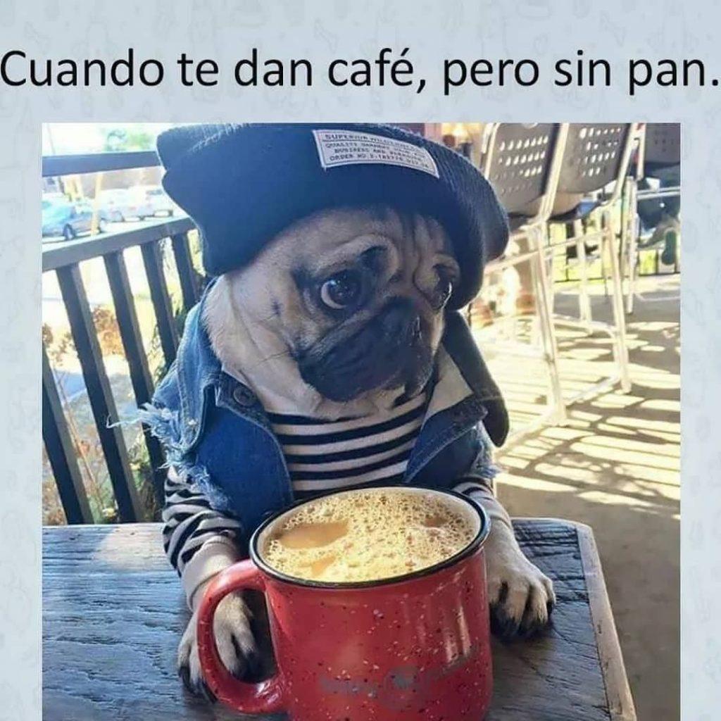 meme café sin pan