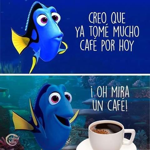 meme dory café